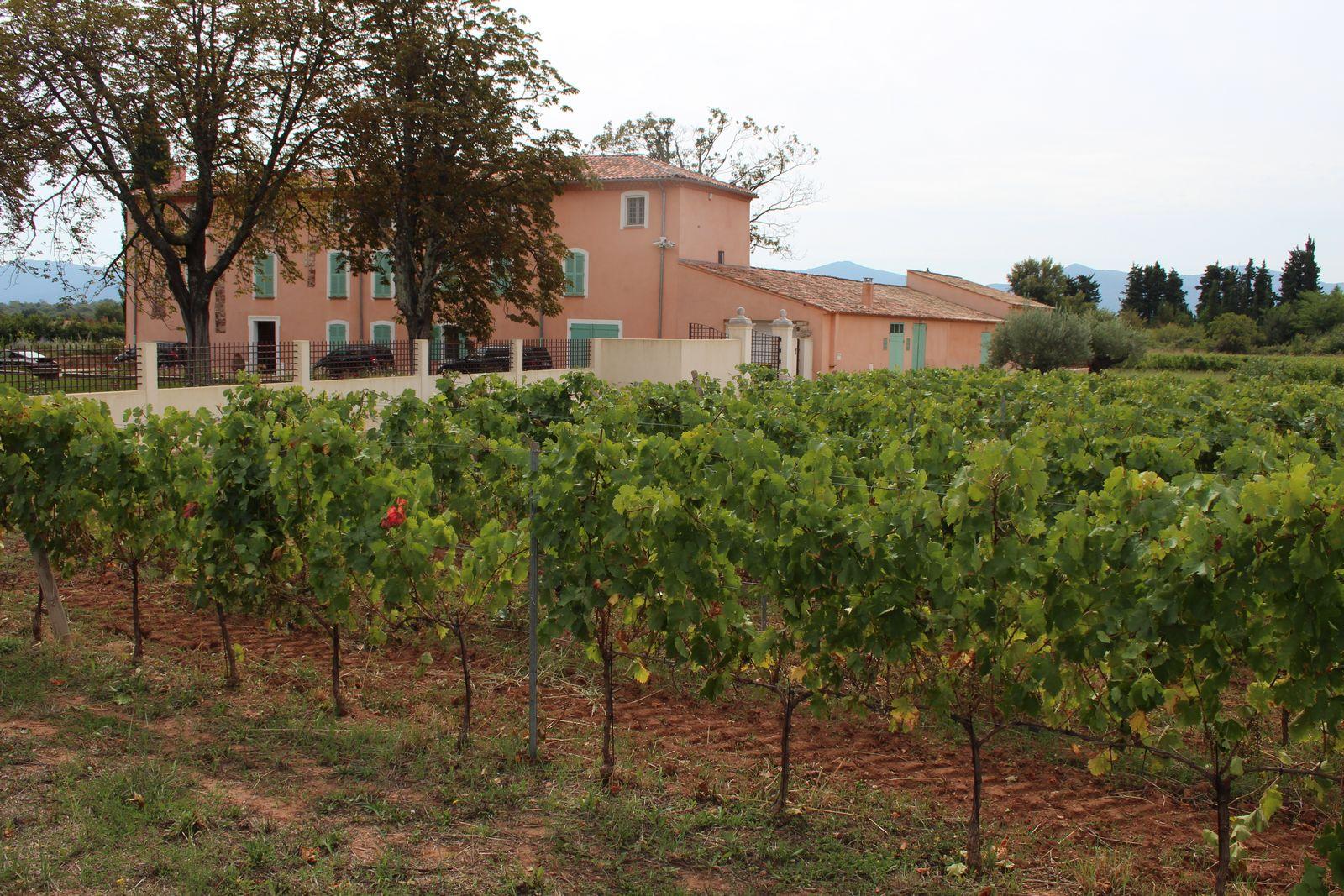 Au paradis des vignobles de Provence