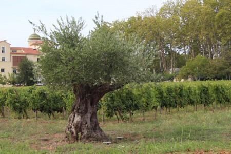 Pique Nique des Vignerons Indépendants au Château Paradis